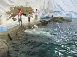 צ'ינדאו - Polar Ocean World
