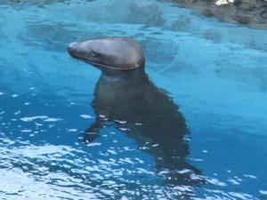 סידני - Taronga zoo