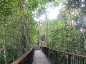 יערות הגשם