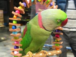 שוק הציפורים