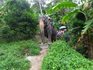 רכיבה על פילים