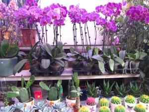 שוק הפרחים