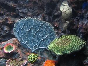 Phuket Aquarium