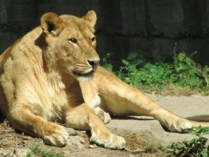 גן החיות של שנגחאי